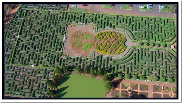 pineappleplantation maze