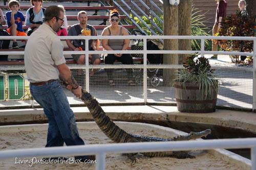 Gatorland Orlando-01775