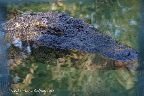 Gatorland Orlando-01811