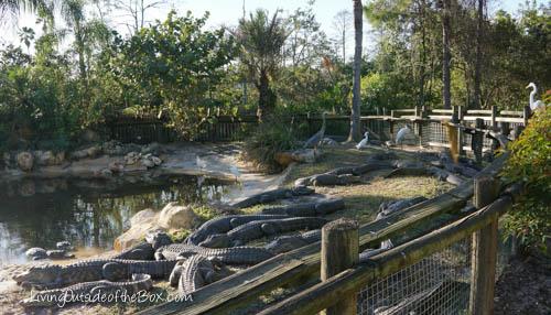 Gatorland Orlando-01816