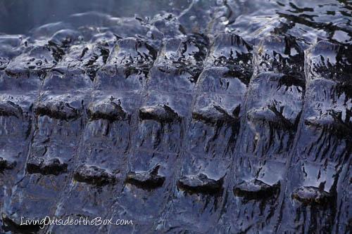Gatorland Orlando-01829