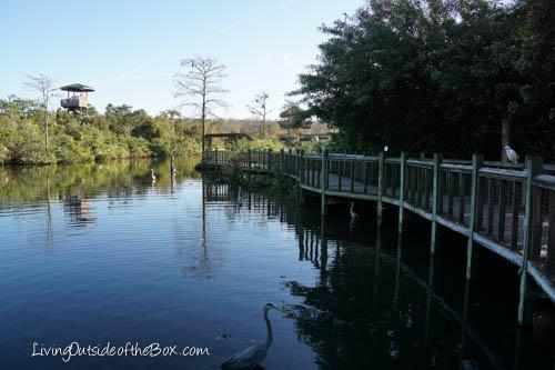 Gatorland Orlando-01844