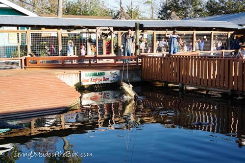 Gatorland Orlando-01854