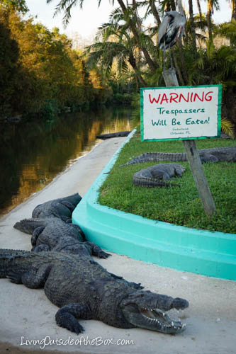 Gatorland Orlando-01898