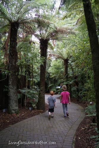 Rainbow Springs Rotorua New Zealand-04