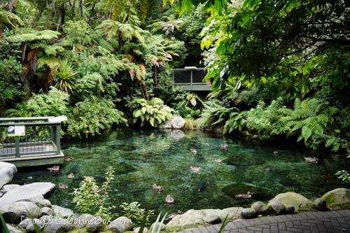 Rainbow Springs Rotorua New Zealand-07