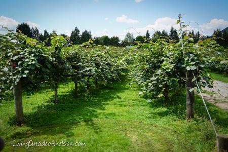 Agrodome Rotorua New Zealand-03611