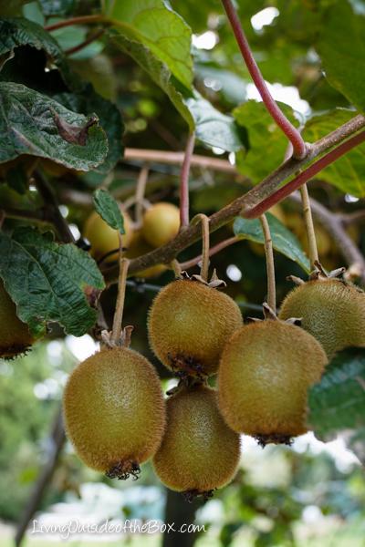 Agrodome Rotorua New Zealand-03622