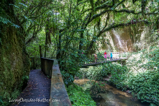 mangapohue-natural-bridge-hike-with-kids-28