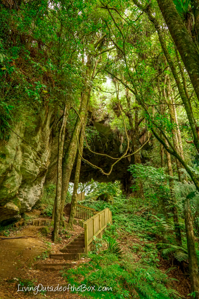 mangapohue-natural-bridge-hike-with-kids-43