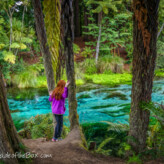 Hamurana Springs Trail with Kids in Rotorua, New Zealand