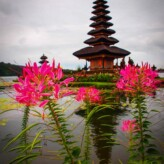 Visiting Bali's Water Temple