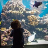 Visiting the Waikiki Aquarium