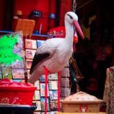 What is up with Storks and France?